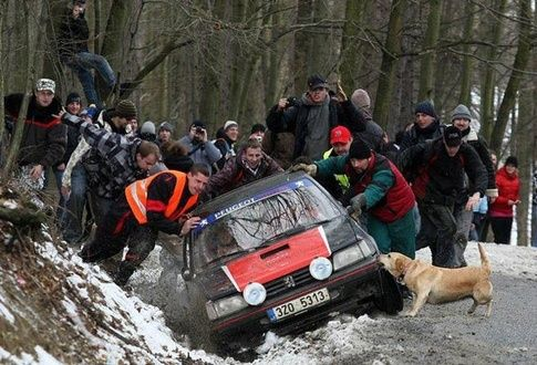 dog helping to pull out car