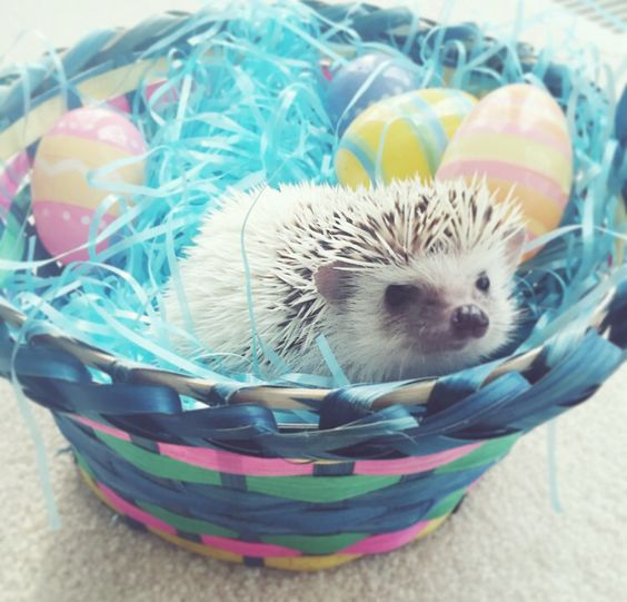 They love Easter as much as I do.: