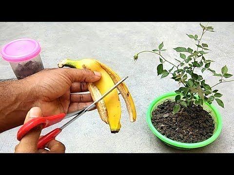 Youtube Fertilizer For Plants Diy Fertilizer Natural Plant Fertilizer