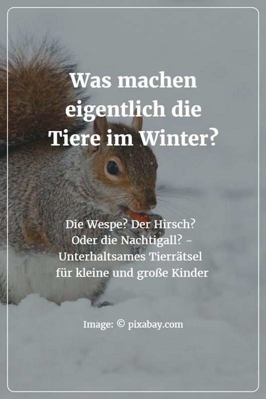 Tierratsel Was Machen Eigentlich Die Tiere Im Winter Die