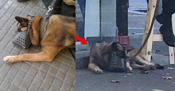 Que les quiten los perros por abusivos y maltratadores FIRMA Y COMPARTE ESTA PETICIÓN AHORA!