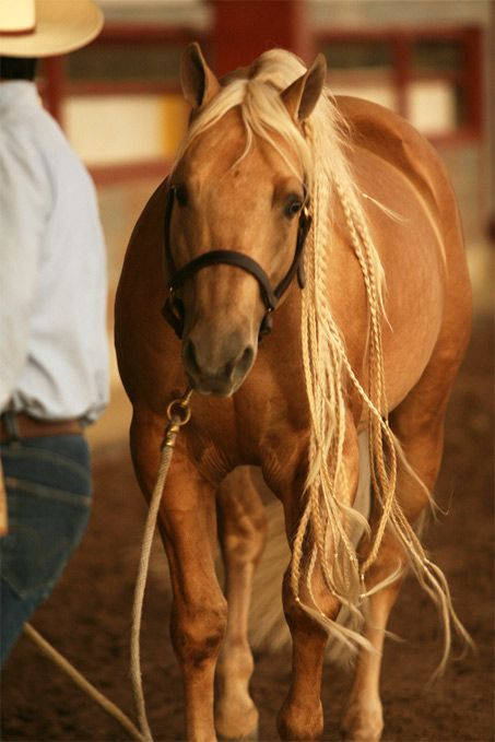 Show Horse Gallery - Whizmo