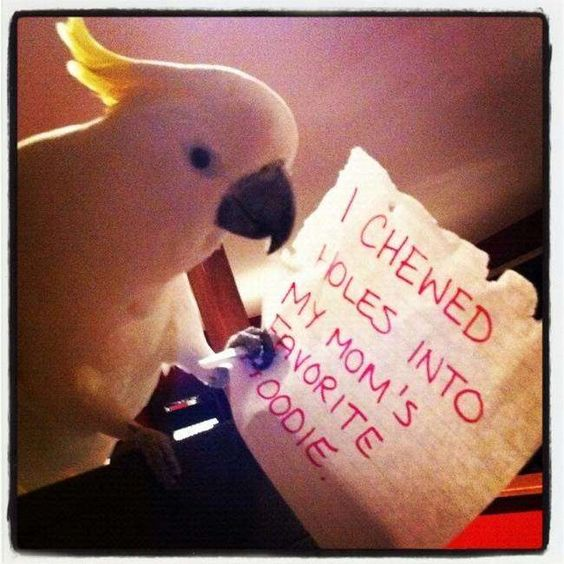 Bird shaming is a very effective form of discipline!   	   	OK, we lied. But it does make for some hilarious photos.