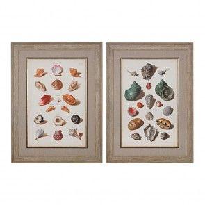 Sterling Industries Muller Shells V, VI - Fine Art Giclee Under Glass, Washed Wood, Washed Wood - 151-020-S2