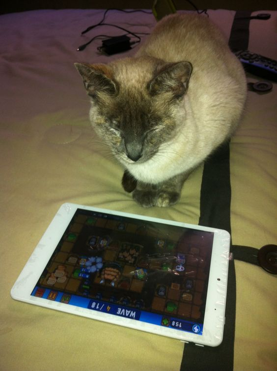 Play cat >_