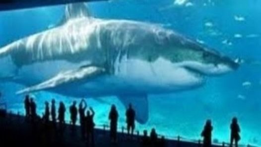 Bigger Than Megalodon Shark Toy : Megalodon the biggest shark ever is still alive