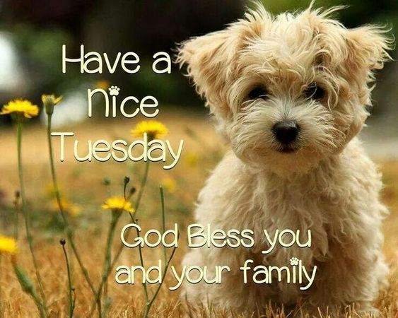 Happy Tuesday God Bless You And Your Family: