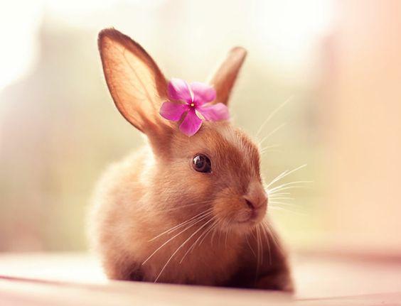 Glückliche Kaninchen stehen vor der Kamera  - http://freshideen.com/haustiere/glueckliche-kaninchen-bilder.html