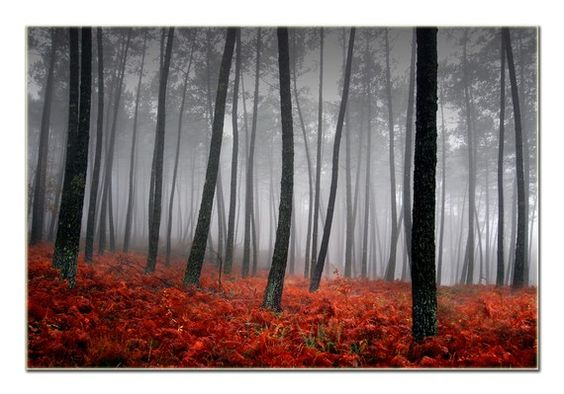 I'm always in search of a great picture to remind me of the sacred grove.  This is beautiful, but it's not quite right.