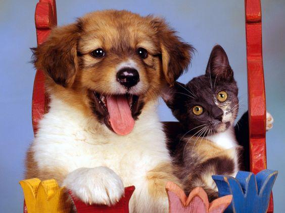 animais amigos - Pesquisa Google