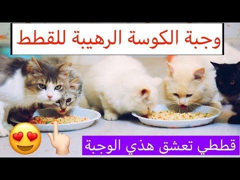 وجبة الكوسة للقطط جدا مفيدة وعن تجربة شوفوا كيف تحبها الملكة تغذية القطط Mohamed Vlog Youtube Quotes For Book Lovers Cats Book Lovers