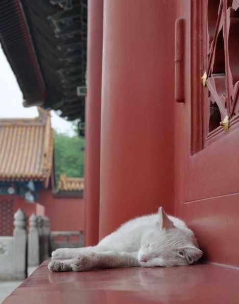 Chairmen Meow: Stray Cats Of Beijing's Forbidden City | WebEcoist