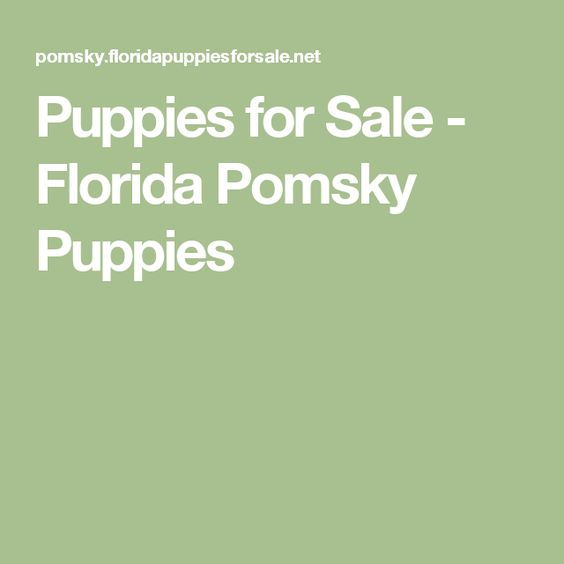 Puppies for Sale - Florida Pomsky Puppies