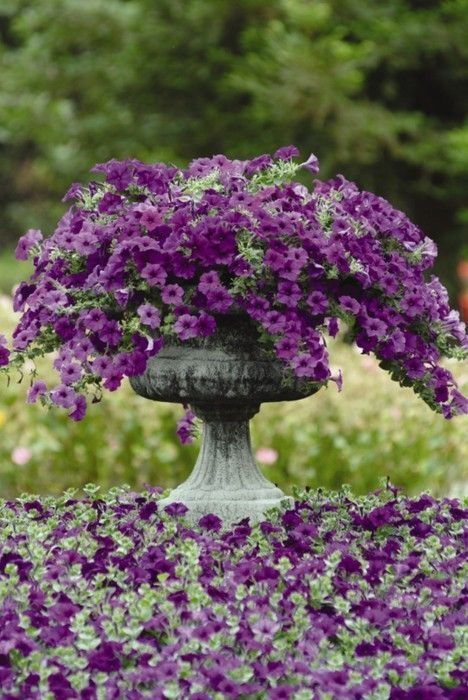purple flowers spilling out of an urn can be a graceful focal point