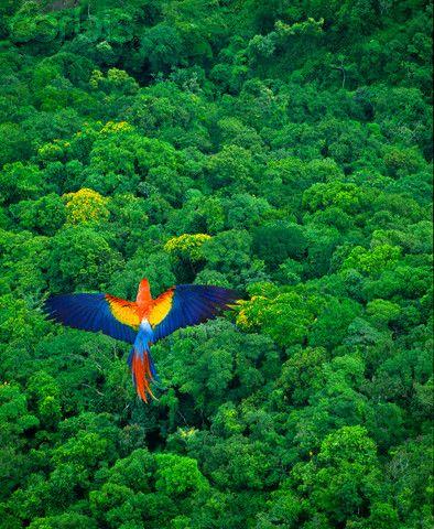 Auch exotische Tiere gibt es in Brasilien.