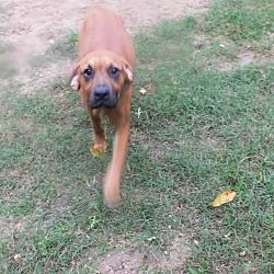 Adopt Mochi On Petfinder In 2020 Dog Adoption Pet Adoption Labrador Retriever