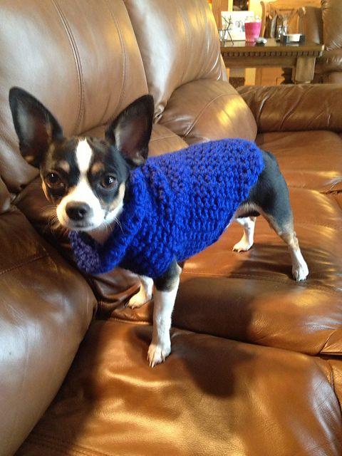 Crochet Dog Sweater Pattern Chihuahua : Crocheted Dog Sweater: free pattern Free Chihuahua ...