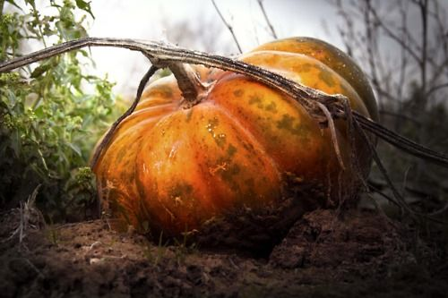 Pumpkin or Coach?