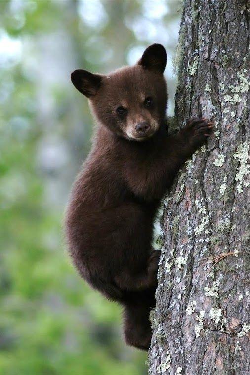 little bear. Cute.....