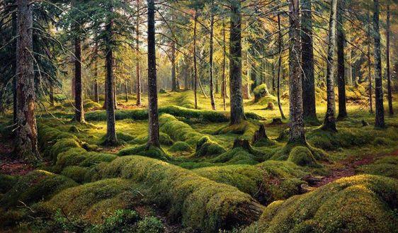 "Ivan Shishkin -    ""Forest cemetery"", 1893. such beauty"