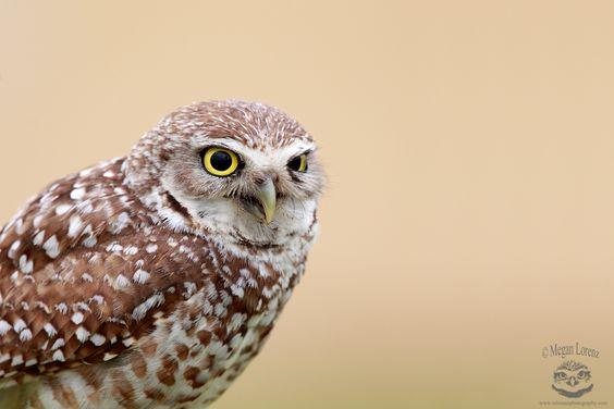 Owl Addict by Megan Lorenz - Photo 93468581 - 500px