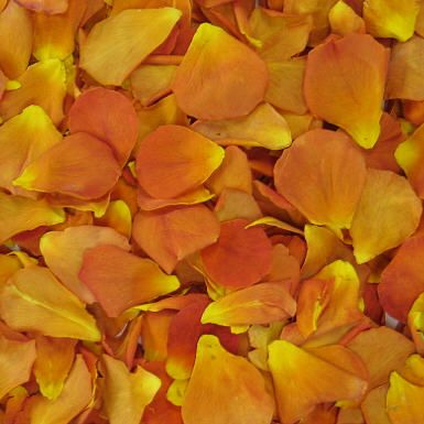 Vavoom Freeze dried petals direct from the grower!  Flyboy Naturals Rose Petals.  www.flyboynaturals.com