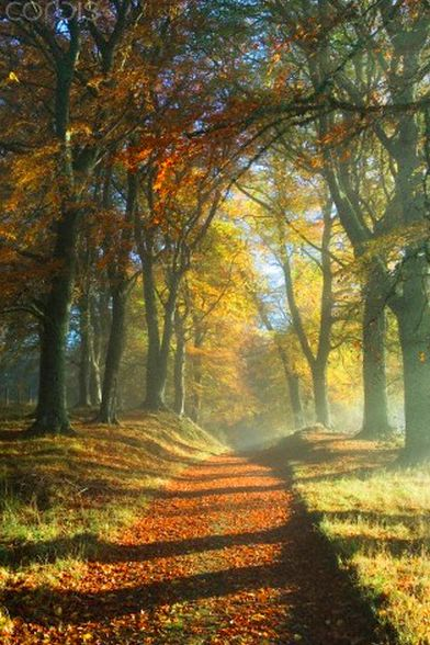 Décor de Provence. Autumn. Otoño.