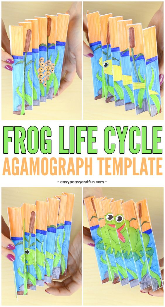 Frog Life Cycle Agamograph Template Lifecycle Of A Frog Frog