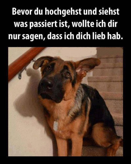 """Der Blick ,wenn der Hund dir sagen will ,,  tut mir leid """""""