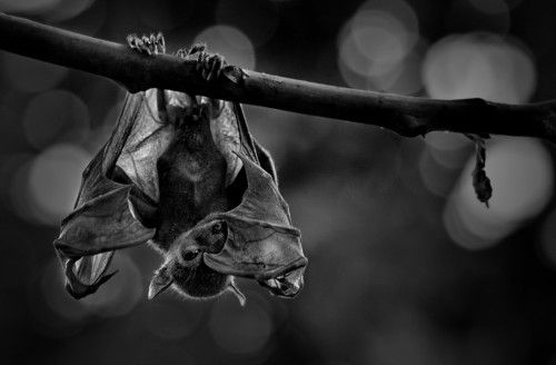 Shy by Andiyan Lutfi