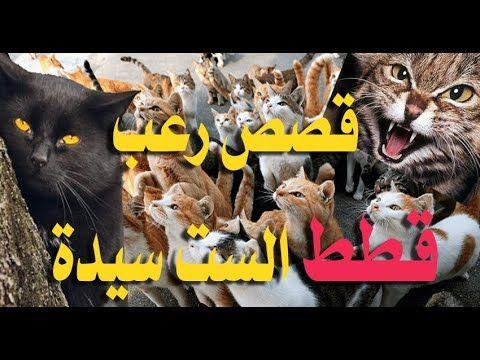 Pin By Alaahassan On قناة علاء الدين للمعلومات