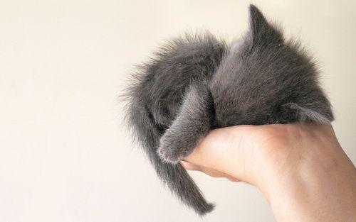 Handful of cute kitty