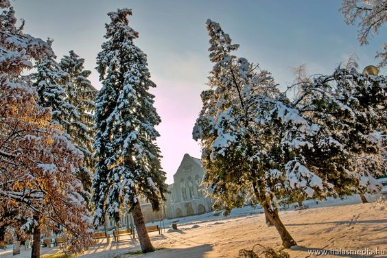 Kiskunhalas, winter, cold, town square, snow, white, tree, canon, by Ramona Rekasi