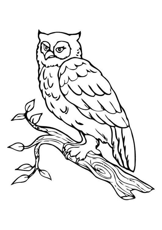 Malvorlage Eule Kostenlose Ausmalbilder Zum Ausdrucken Ausmalbilder Eulen Malvorlage Eule Ausmalbilder Vogel