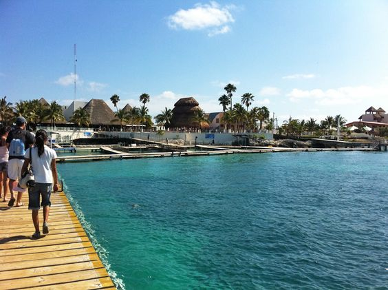 Dolphin Discovery Isla Mujeres A Short Ferry Ride From Cancun You Can Swim With Dolphins