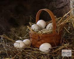 old egg baskets - Google Search