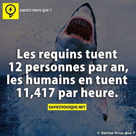 Les requins tuent 12 personnes par an – les humains en tuent 11,417 par heure. | Saviez Vous Que?