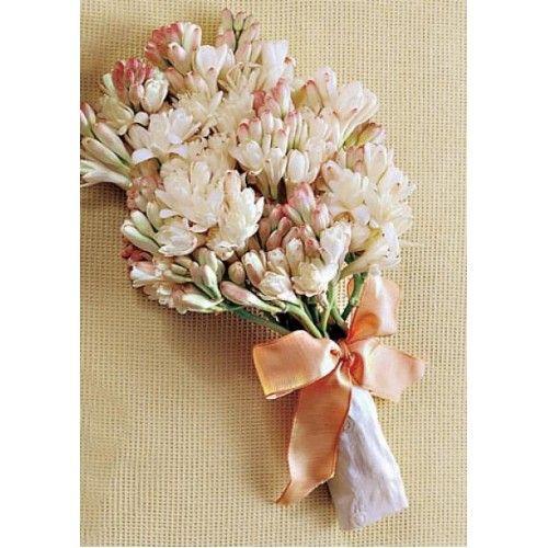 angelica flor - Pesquisa Google
