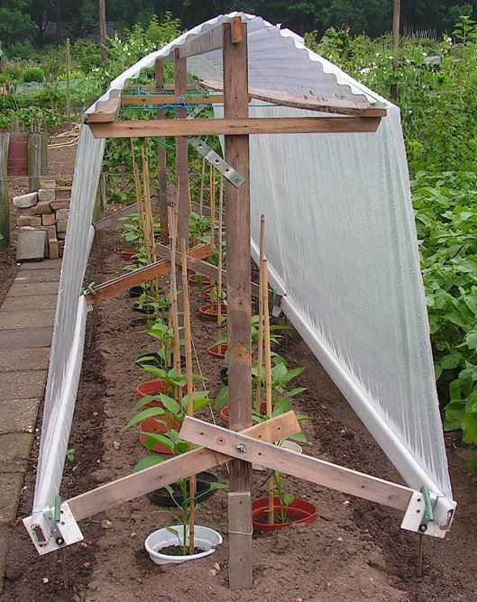 25) Plastic foil at the roof over peppers or tomatoes
