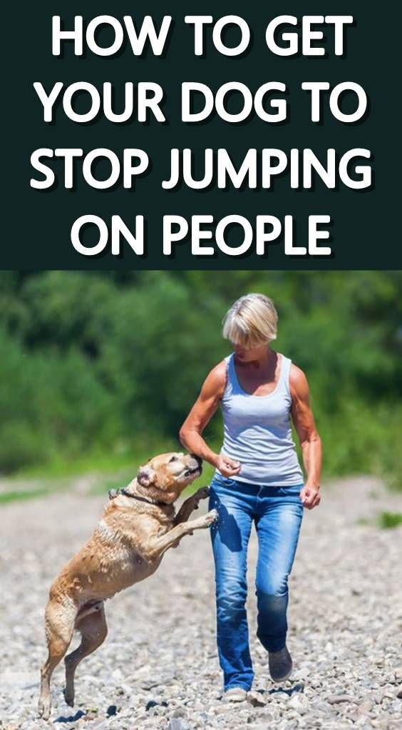 It S Important To Learn How To Stop A Dog Jumping Up On People For
