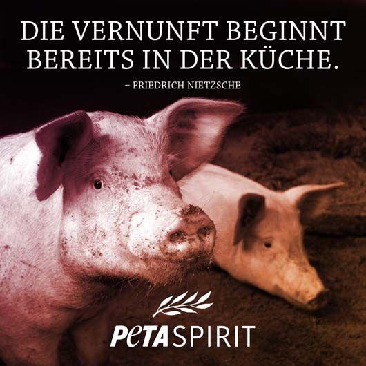 Alle Zitate Mit Bilder Von Peta Spirit Auf Einem Blick Zitate Tiere Tierrechte Peta