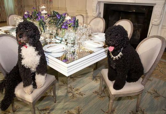 Did You Know Your Tax Dollars Pay for the First Family's Dogs to Eat Off of China Place Settings & Drink from Crystal Glasses at Their Very Own Elegant Miniature Table?