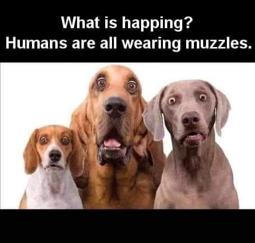 Pin By Susie White On Funny Dog Memes In 2020 Funny Dog Memes Funny Animals Me Too Meme
