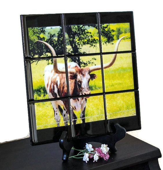 Texas Longhorn Photo  Outdoor Photography  by BeesHandmadeGifts