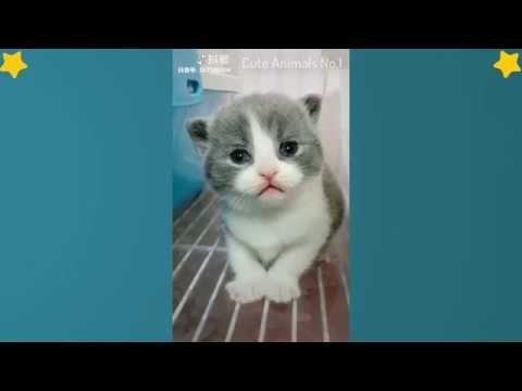 Tiktok Cat Tik Tok Pets Tik Tok Funny Dog Tik Tok Animals 19 Cutecat Cutedog Cuteanimals Adorablecat Cute Baby Cats Cute Cat Gif Cute Animal Videos
