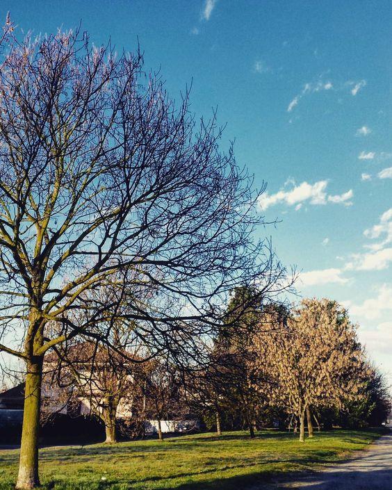 On instagram by giosardisko #landscape #contratahotel (o) http://ift.tt/1KGcqb9 #piemonte #piedmont #inverno #winter #campi #campagnanovarese #paesaggio  #sky #cielo #nuvole #clouds #alberi #trees #arbusti #shrubbery #panorama #prato #leaves #sempreverde #rami