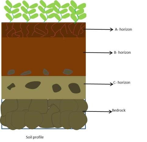 Soil School Help By Gunjan Soil Soil Layers School Help