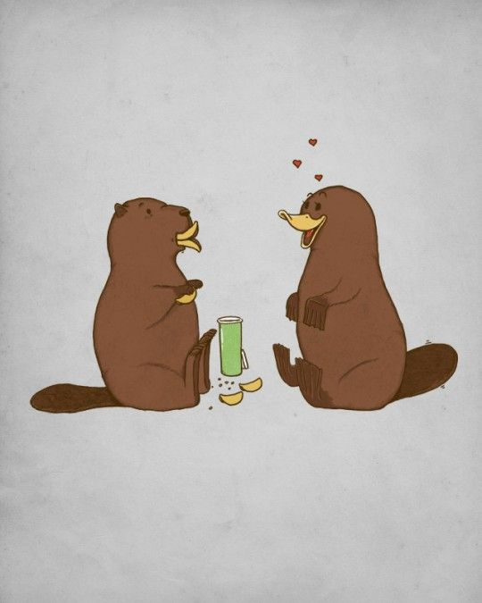 How a beaver flirts with a platypus.