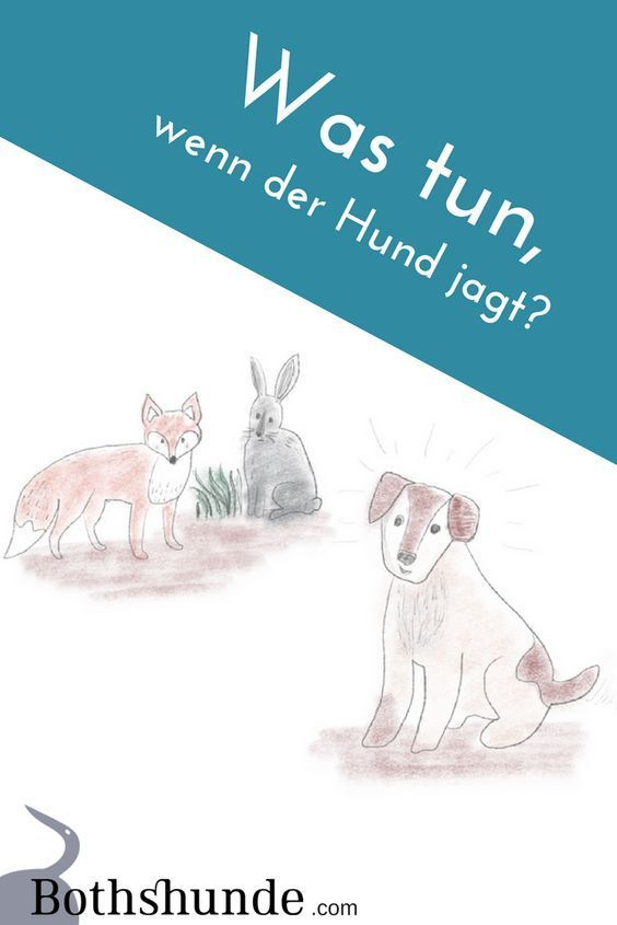 Was Tun Wenn Der Hund Jagt Hunde Hundehaltung Hundeverhalten