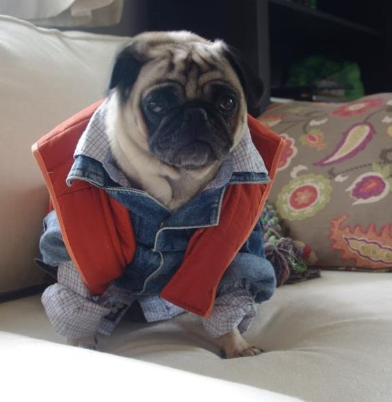 It's a pug. In a Marty McFly costume. I love everything about this.